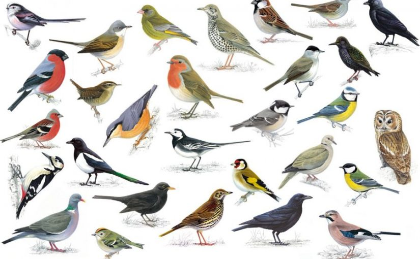 Identify Birdsong Workshop & Dawn Chorus Walk 2019